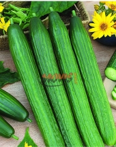 Bulgarian Cucumbers